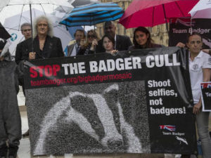 Stop the badger cull sign